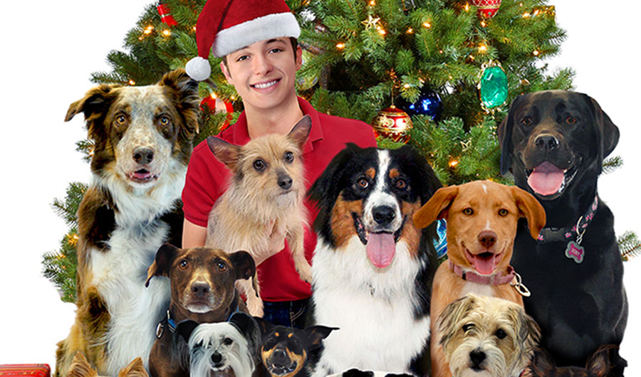 12 Dog Days Till Christmas.Handpicked Entertainment For Your Whole Family Dove